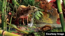 Silvacola acares, a tiny hedgehog, lived roughly 13 million years after an asteroid wiped out the dinosaurs and left the mammals as the dominant land animals. Artwork by Julius Csotonyi.