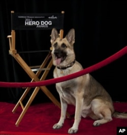 One of Rin Tin Tin's descendants serves as an ambassador for the American Humane Association's Hero Dog Awards, which honor dogs that help people in need.