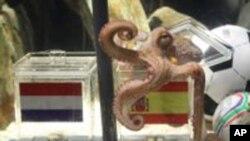 Ο Πώλ διαλέγει την Ισπανία έναντι της Ολλανδίας