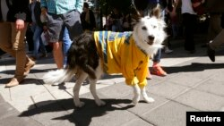 Rim, a Border Collie, wears a jersey of Sweden's national ice hockey team after they won the 2013 IIHF Ice Hockey World Championship in Stockholm, May 20, 2013.