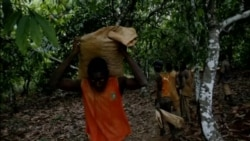 Cocoa Smuggling Increases in West Africa