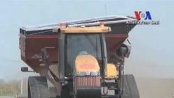 Amerikalı Çiftçiler Kuraklıktan Dolayı Erken Mısır Hasadı Yapıyor