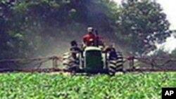 L'agriculture pourrait absorber la main-d'oeuvre jeune et aider les Pma à sortir de la pauvreté (AP)