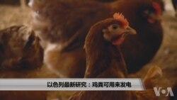 以色列最新研究:鸡粪可用来发电