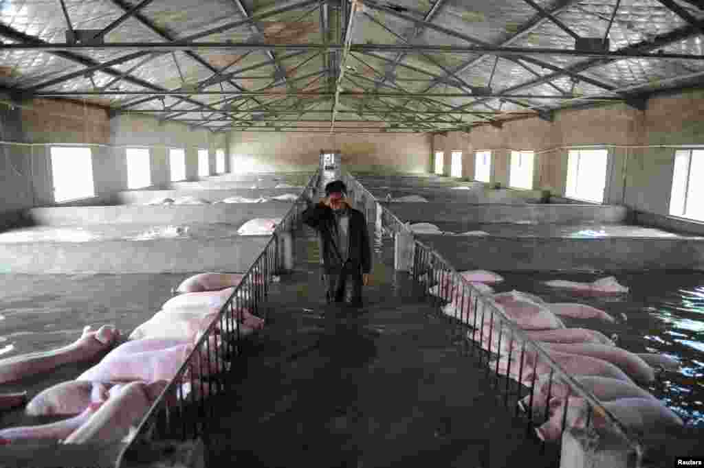 An employee wipes away tears as he walks through a flooded farm, where pigs cannot be moved away from due to an environmental protection and epidemic prevention measure, before he leaves for a safer place in Liu'an, Anhui Province, China, July 4, 2016.