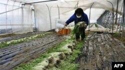 Ճապոնիայում աղտոտված ջուրը թափվելու է օվկիանոս