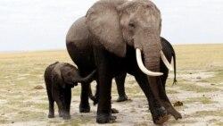 코끼리가 개미를 피하는 이유