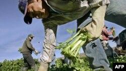 کشاورزان جوان امریکا و کشت در زمینهای محافظت شده