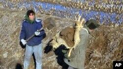 북한 평양시 인근의 농부들. (자료사진)