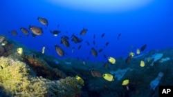 Sinh vật và san hô trong lòng biển