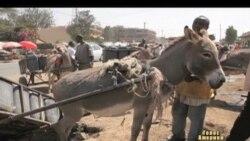 У кенійських віслючків знайшлись захисники
