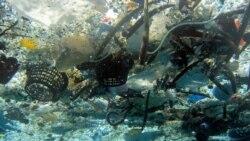 Plastics Blamed for Harm to Sea Environment