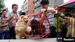 Các nhà hoạt động mua chó từ nhà cung cấp để ngăn chặn việc chúng bị làm thịt trước lễ hội thịt cầy thường niên tại Trung Quốc.