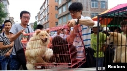 FILE - Animal activists load a cage holding dogs which they just bought from vendors to stop them from being eaten ahead of the annual dog meat festival in Yulin, Guangxi Zhuang Autonomous Region, June 20, 2014.