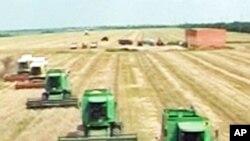 밀을 수확하는 미국의 농장 (자료사진)