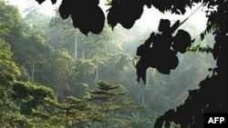 Незаконная вырубка леса по всему миру преследуется американским законом