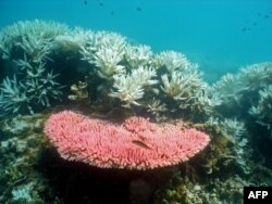 Australian Institute of Marine Science image shows bleaching on a coral reef at Halfway Island in Australia's Great Barrier Reef which lost more than half its coral cover in the past 27 years due to storms, poisonous starfish and bleaching linked to clima