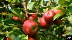 وزارت دفاع افغانستان، تولیدات زراعتی داخلی را جایگزین محصولات خارجی کرده است