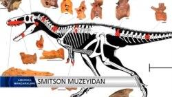 O'zbek dinozavri? Temurlang
