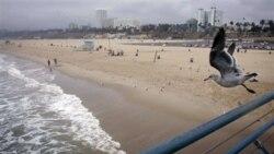 Нова технолошка преселба: Од Силиконската долина во Силиконската плажа