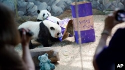 2015年7月15日,美国出生的大熊猫双胞胎美轮和美奂在亚特兰大动物园两岁生日时赏玩生日礼物。它们在11月3日被送回中国。