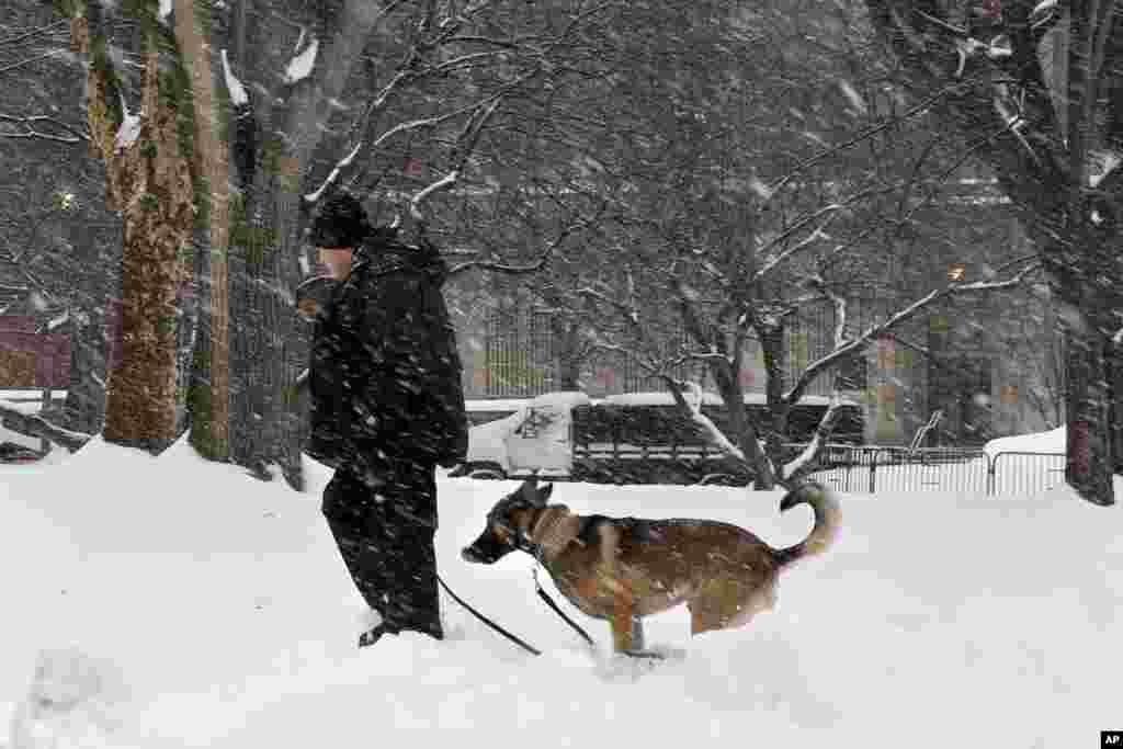 سگ نیروی امنیتی در پارک لافایت در نزدیکی کاخ سفید زیر برف ها را می جوید - ۱۳ فوریه ۲۰۱۴
