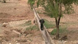 Palestinian Farmers in Jordan Valley Face Disastrous Growing Season