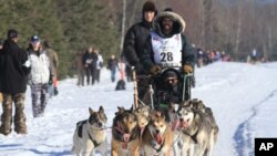 Cim Smyth of Big Lake, Alaska, drives his dog team along the Campbell Creek Airstrip during the ceremonial start of the 2014 Iditarod Trail Sled Dog Race on Saturday, March 1, 2014.