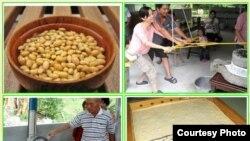 台湾东部地区的有机农业