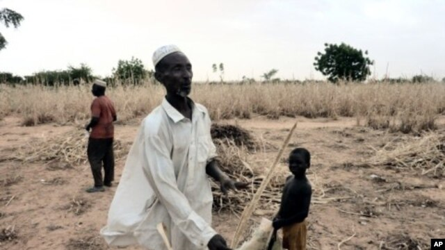 A man from Niger in his ravaged field due to lack of rain this year. Western Niger is under the risk of a new food crisis. (File Photo - October 8, 2011)