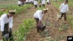 지난 22일 북한 황해도 고현리에서 가뭄으로 말라붙은 옥수수밭에 물을 대는 군인들.