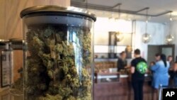 Des clients achètent des plants de cannabis le 20 avril 2016, à San Francisco, États-Unis.