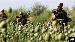 منشیات کےخلاف امریکی اور روسی چھاپہ: کرزئی کی مذمت