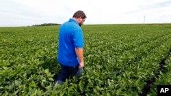 El agricultor Michael Petefish camina a través de su plantación de soja cerca de Claremont en el sur de Minnesota el 18 de julio de 2018.
