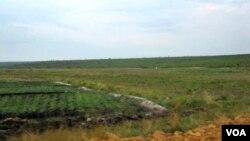 Arrozais no Rio Longa, província de Kuando Kubango (VOA / A. Capalandanda)
