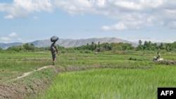 Haiti'de Ormanları Kurtarma Çabası