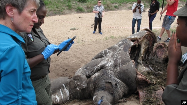 U.S. Secretary of the Interior Sally Jewell talks with investigators near the carcass of a poached rhino in Kruger National Park, South Africa's biggest wildlife reserve, Jan. 29, 2016.