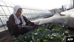 Chính phủ Nhật đã tìm thấy mức phóng xạ cao trong rau dền (spinach) và sữa trong khu vực gần nhà máy điện hạt nhân bị hư hại vì thiên tai