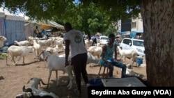 Assane Diop, au milieu de ses moutons, à Dakar, le 27 août 2017. (VOA/Seydina Aba Gueye)