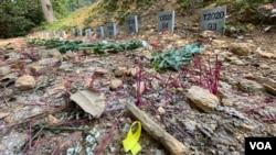 有拜祭者在沙嶺公墓放上代表反送中運動抗爭者的黃絲帶。(美國之音湯惠芸)