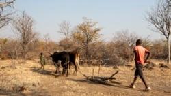 Aumetam avisos de fome devido a seca no Namibe – 2:43