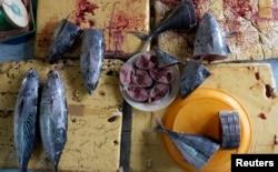 Người dân ở nhiều khu vực tiếp tục nhặt cá chết đem bán, mặc dù bản thân họ không dám ăn, thậm chí không dám xuống biển.