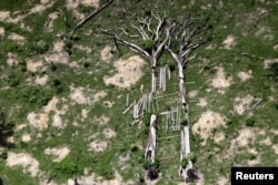 Fallen trees are seen during an operation to combat illegal mining and logging conducted by agents of the Brazilian Institute for the Environment and Renewable Natural Resources, supported by military police, in the municipality of Novo Progresso, Para State, northern Brazil, Nov. 11, 2016.