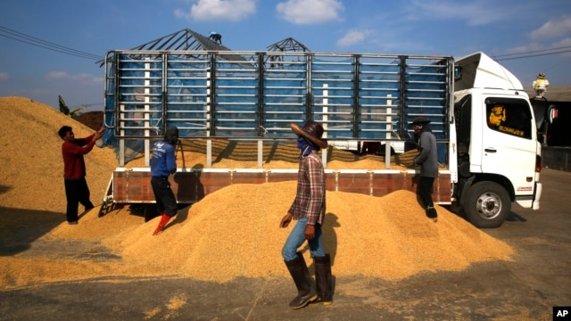 FILE - Thai workers unload rice from the truck of a farmer, at a rice collection center, in the northeastern province of Roi Et , in Thailand.