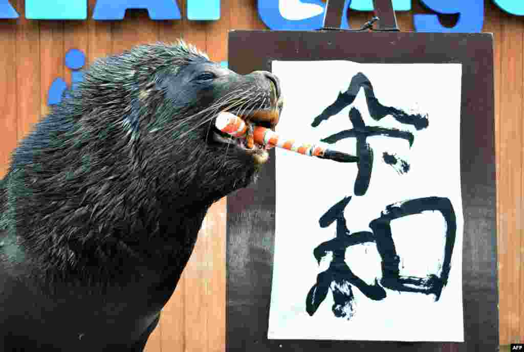 "Sea lion 'Leo' poses after writing the characters for the new era name ""Reiwa"" at Hakkeijima Sea Paradise in Yokohama, suburban Tokyo. Japan revealed the name of the era that will define the new emperor's reign when he ascends the Chrysanthemum Throne next month following a historic abdication."