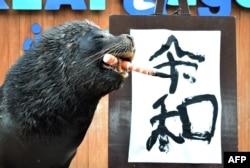 """Singa laut bernama """"Leo"""" berpose setelah menuliskan huruf kanji untuk nama era kekaisaran baru Jepang """"Reiwa"""" dalam sebuah pertunjukan di hadapan para wartawan dan pengunjung taman di Hakkeijima Sea Paradise, di Yokohama, pinggiran Tokyo, 1 April 2019. (Foto: AFP)"""