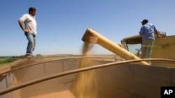 巴西農場工人把收穫的大豆裝入卡車。 (資料圖片)