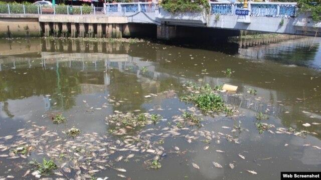 Cá chết trắng kênh Nhiêu Lộc Thị Nghè ngày 17/5/2016. (Ảnh chụp từ trang Dantri).