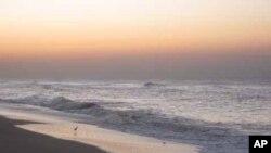 Наглото намалување на морските алги критично за синџирот на исхрана