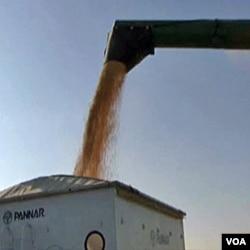 Etanol se najvećim dijelom dobija preradom kukuruza